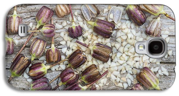 Meleagris Photographs Galaxy S4 Cases - Snakes Head Fritillary Seed Pods  Galaxy S4 Case by Tim Gainey