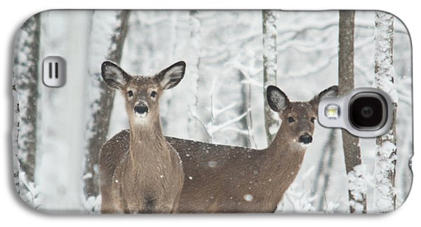 Animation Photographs Galaxy S4 Cases - Snow Deer Galaxy S4 Case by Douglas Barnett