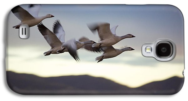 Wildlife Refuge. Galaxy S4 Cases - Snow Geese In Flight Galaxy S4 Case by Panoramic Images
