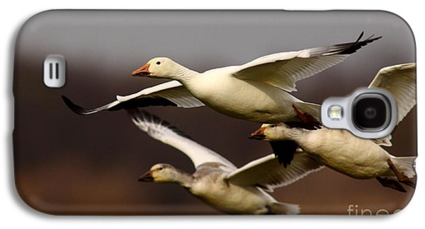 Morph Galaxy S4 Cases - Snow Goose Formation Migration Galaxy S4 Case by Robert Frederick
