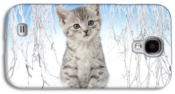 Christmas Eve Galaxy S4 Cases - Snow Kitten Galaxy S4 Case by Greg Cuddiford