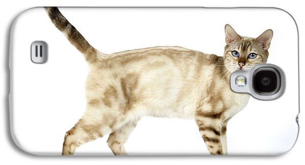 Marble Eye Galaxy S4 Cases - Snow Marble Bengal Cat Galaxy S4 Case by John Daniels
