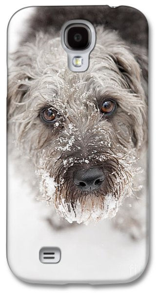 Pups Digital Art Galaxy S4 Cases - Snowy Faced Pup Galaxy S4 Case by Natalie Kinnear