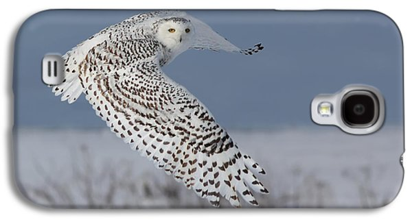 Mystic Art Galaxy S4 Cases - Snowy in action Galaxy S4 Case by Mircea Costina Photography