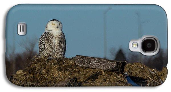 Snowy Galaxy S4 Cases - Snowy Owl Galaxy S4 Case by Aaron J Groen
