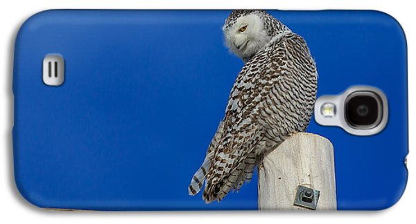Snowy Galaxy S4 Cases - Snowy Owl Galaxy S4 Case by Everet Regal