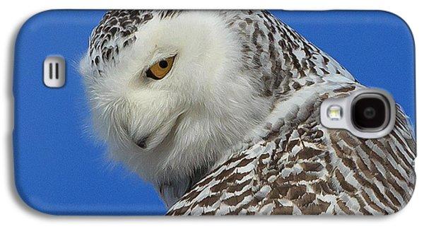 Snowy Galaxy S4 Cases - Snowy Owl Greeting Card Galaxy S4 Case by Everet Regal