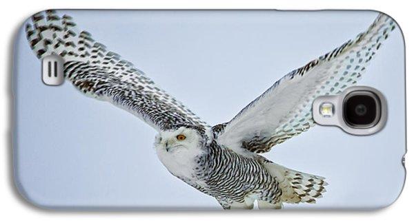 Snowy Galaxy S4 Cases - Snowy Owl in flight Galaxy S4 Case by Everet Regal