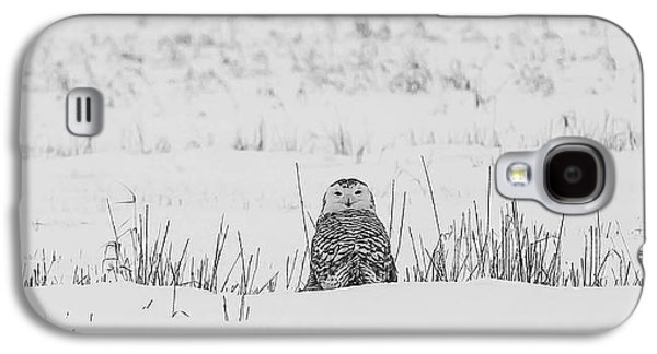 Snow Galaxy S4 Cases - Snowy Owl in Snowy Field Galaxy S4 Case by Carrie Ann Grippo-Pike