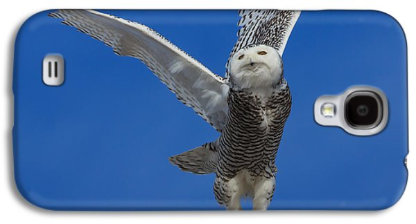 Snowy Galaxy S4 Cases - Snowy Owl taking flight Galaxy S4 Case by Everet Regal