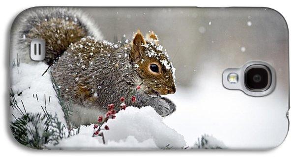 Snowy Squirrel Galaxy S4 Case by Christina Rollo