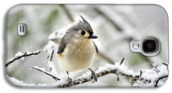 Snowy Tufted Titmouse Galaxy S4 Case by Christina Rollo