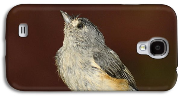 Tufted Titmouse Galaxy S4 Cases - Soggy Titmouse Galaxy S4 Case by Lara Ellis