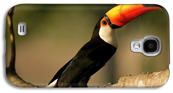 South America, Brazil, Pantanal, Mato Galaxy S4 Case by Joe and Mary Ann Mcdonald