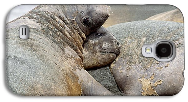 Ocean Mammals Galaxy S4 Cases - Southern Elephant Seals Galaxy S4 Case by Art Wolfe