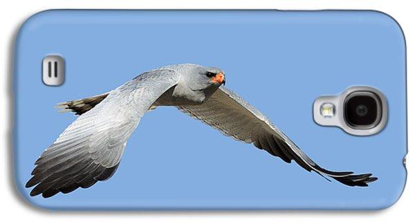 Raptors Galaxy S4 Cases - Southern Pale Chanting Goshawk in flight Galaxy S4 Case by Johan Swanepoel