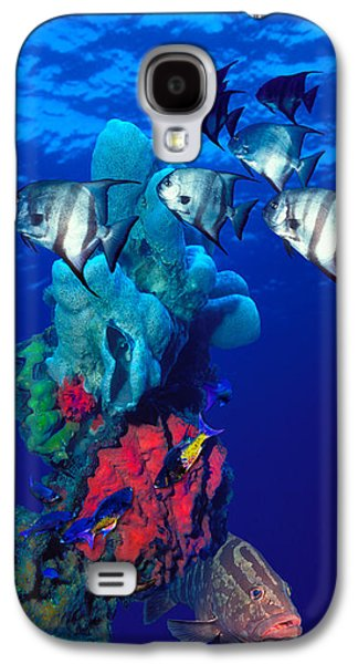 Schools Of Fish Galaxy S4 Cases - Spadefishes With Nassau Grouper Galaxy S4 Case by Panoramic Images