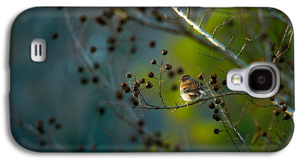 Sparrow In The Warm Light Galaxy S4 Case by Shelby  Young