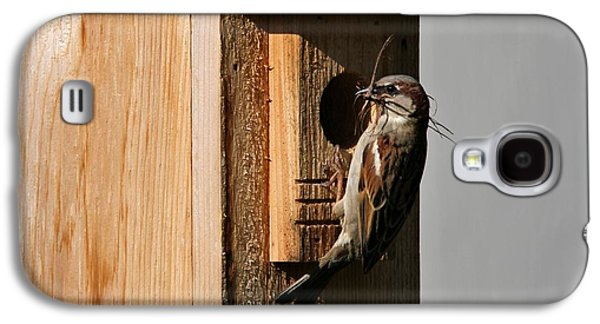 Sparrow Galaxy S4 Cases - Sparrow Nest And Birdhouse Galaxy S4 Case by Dan Sproul