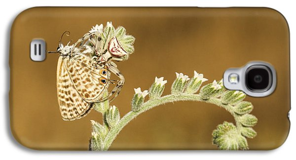 Butterfly Prey Galaxy S4 Cases - Spider feeds on a butterfly 3  Galaxy S4 Case by Alon Meir