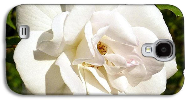 Floribunda Galaxy S4 Cases - Splendid Iceberg Rose Galaxy S4 Case by Will Borden
