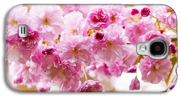 Cherry Blossoms Photographs Galaxy S4 Cases - Spring cherry blossoms  Galaxy S4 Case by Elena Elisseeva