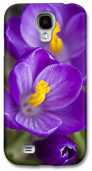Nature Study Photographs Galaxy S4 Cases - Spring Crocus Galaxy S4 Case by Adam Romanowicz