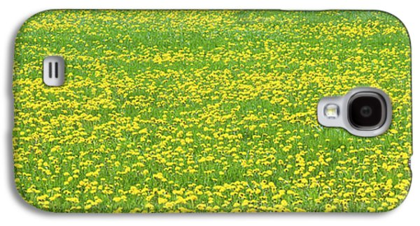 Maine Meadow Galaxy S4 Cases - Spring Farm Panorama With Dandelion Bloom in Maine Canvas Poster Print Galaxy S4 Case by Keith Webber Jr