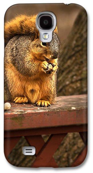 Fox Squirrel Galaxy S4 Cases - Squirrel Eating a Peanut Galaxy S4 Case by  Onyonet  Photo Studios