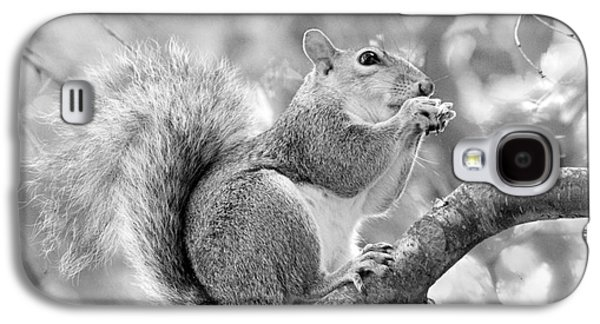 Squirrel Digital Art Galaxy S4 Cases - Squirrel in a Tree - Black and White Galaxy S4 Case by Natalie Kinnear