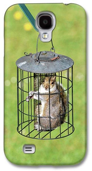Squirrel In Bird Feeder Galaxy S4 Case by Dr P. Marazzi