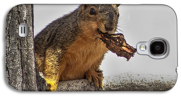 Fox Squirrel Galaxy S4 Cases - Squirrel Lunch Time Galaxy S4 Case by Robert Bales