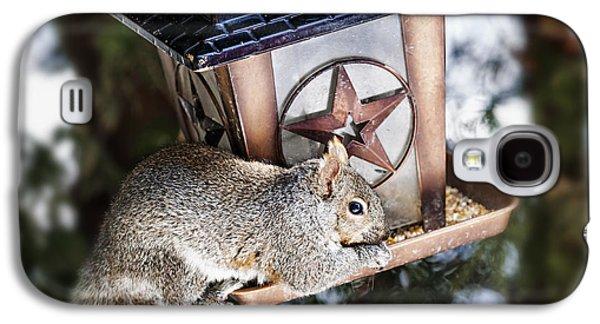Feeding Galaxy S4 Cases - Squirrel on bird feeder Galaxy S4 Case by Elena Elisseeva