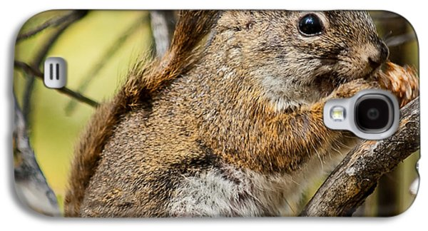 Haybale Galaxy S4 Cases - Squirrel  Galaxy S4 Case by Robert Bales
