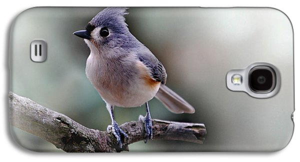 Photos Of Birds Galaxy S4 Cases - Sring Time Titmouse Galaxy S4 Case by Skip Willits