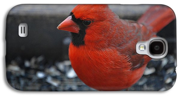 Photos Of Birds Galaxy S4 Cases - St. Louis Galaxy S4 Case by Skip Willits