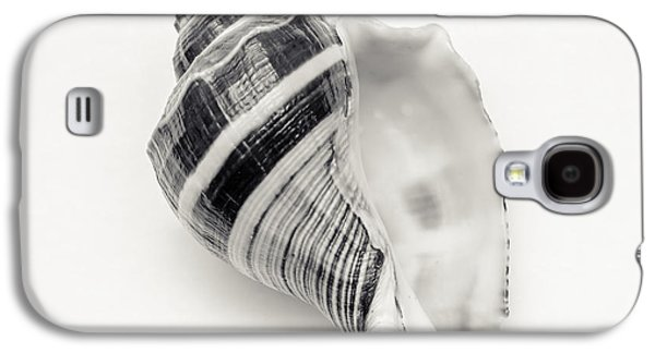 Beach Photography Galaxy S4 Cases - Striped Sea Shell 2 Galaxy S4 Case by Lucid Mood