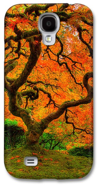 Lone Tree Galaxy S4 Cases - Structured Beauty Galaxy S4 Case by Dustin  LeFevre