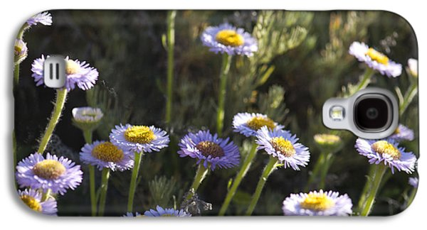 Laura Wrede Galaxy S4 Cases - Suisun Marsh Aster in the Morning Light Galaxy S4 Case by Artist and Photographer Laura Wrede