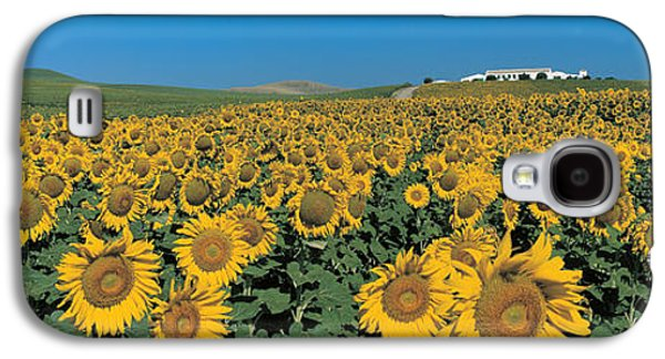 Sunflower Field Galaxy S4 Cases - Sunflower Field Andalucia Spain Galaxy S4 Case by Panoramic Images