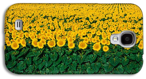 Sunflower Field Galaxy S4 Cases - Sunflower Field, Maryland, Usa Galaxy S4 Case by Panoramic Images