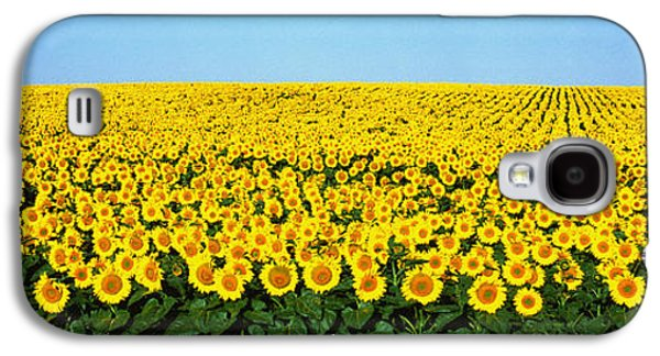 Sunflower Field, North Dakota, Usa Galaxy S4 Case by Panoramic Images
