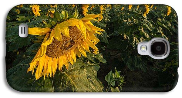 Sunflower Fields Galaxy S4 Cases - Sunflower Field Galaxy S4 Case by Steve Gadomski