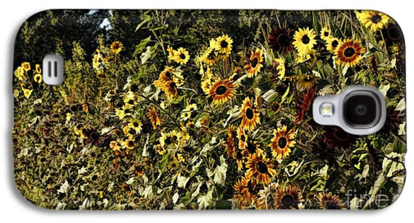 Sunflower Patch Galaxy S4 Cases - Sunflower Fields Forever Galaxy S4 Case by Peggy J Hughes