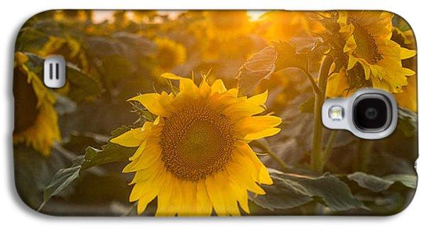Sunflower Fields Galaxy S4 Cases - Sunflower Flare Galaxy S4 Case by Steve Gadomski