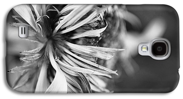 Contemplative Photographs Galaxy S4 Cases - Sunflower Focus Galaxy S4 Case by Terry Rowe