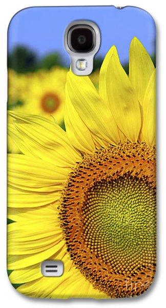 Sunflower Fields Galaxy S4 Cases - Sunflower in field Galaxy S4 Case by Elena Elisseeva