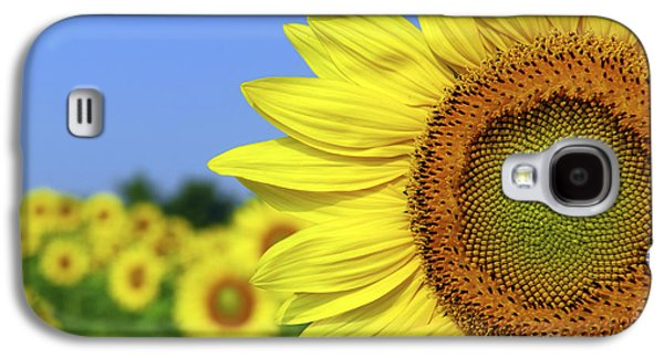 Sunflower Fields Galaxy S4 Cases - Sunflower in sunflower field Galaxy S4 Case by Elena Elisseeva