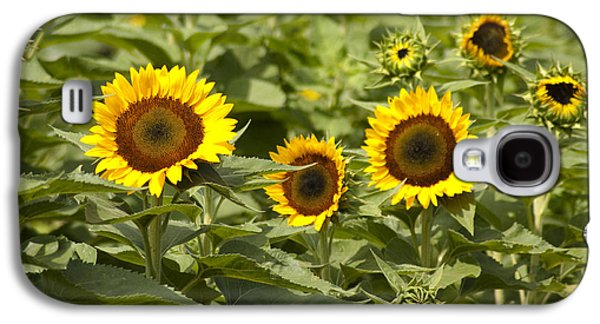 Sunflower Patch Galaxy S4 Cases - Sunflower Patch Galaxy S4 Case by Bill Cannon