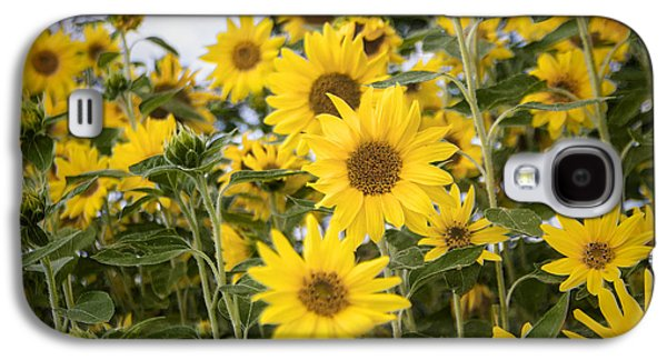 Sunflower Patch Galaxy S4 Cases - Sunflower Patch Galaxy S4 Case by Jef Franklin